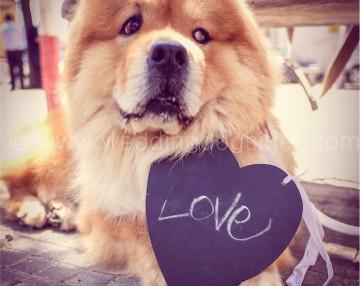 www.emotionalphotographer.com_fotografodacani_weddingdogphotography_fotodalpuntodivistadelcane (66 di 140)